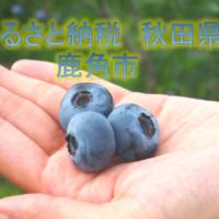 ふるさと納税ブルーベリー【特選・大玉】冷凍1kg