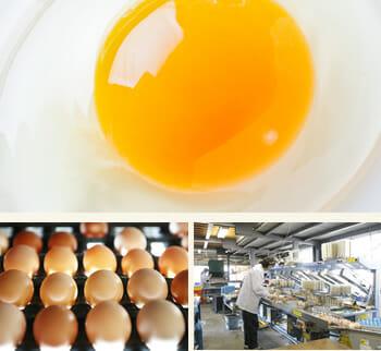 ふるさと納税 卵植物性のエサ