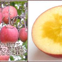 ふるさと納税 長野県 飯綱町 サンふじ りんご 特秀5kg