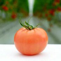 ふるさと納税 四万十産トマト「凛と」