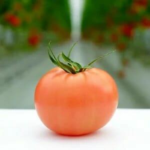 ふるさと納税 四万十産トマト